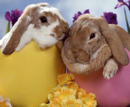 Páscoa é tempo de amor